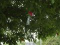 Nussbaum mit Blumenvasen_Bildgröße ändern