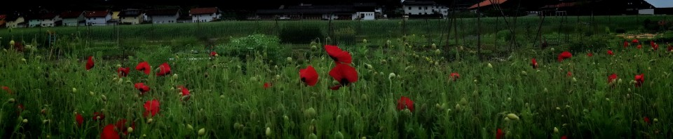 cropped-mohn_cut.jpg